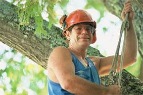 Stewart H.B. Stevens, Arborist